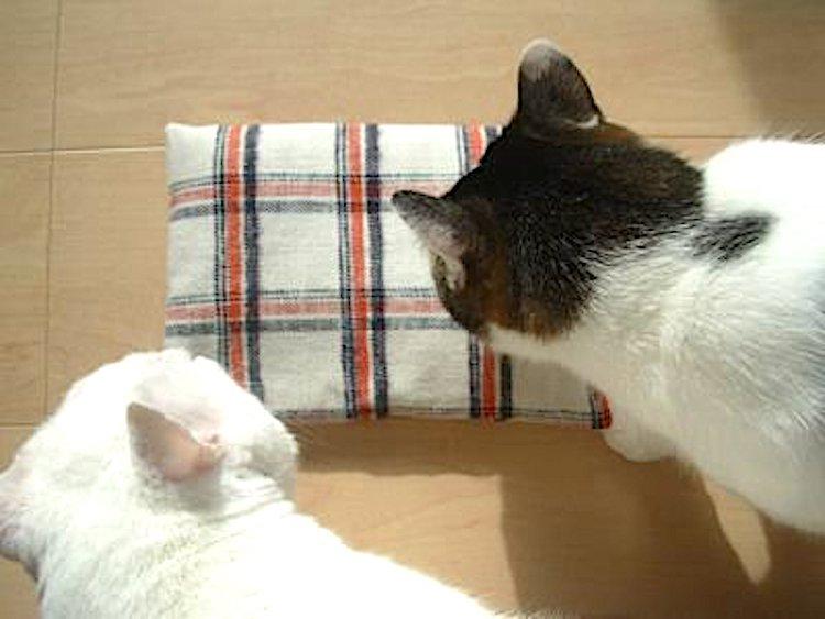 香ばしいぬかの香りに、猫も寄ってくる