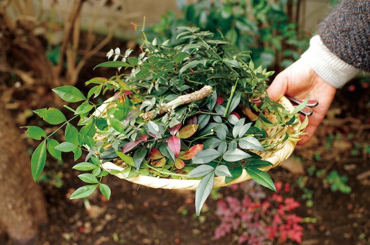 本の染色に使われる植物