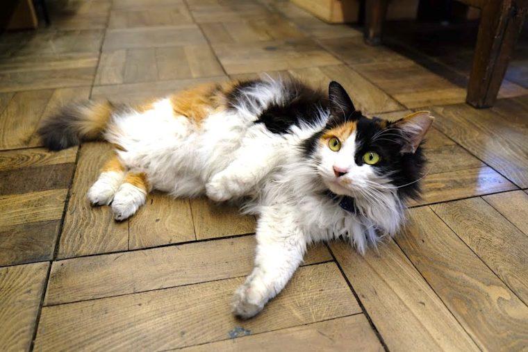 松戸 山田屋の家庭用品 看板猫 かのんちゃん