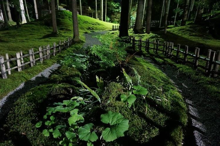 苔庭ライトアップ 苔の里 叡智の杜