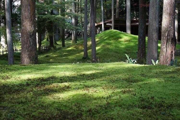 苔の里 日用町 苔庭