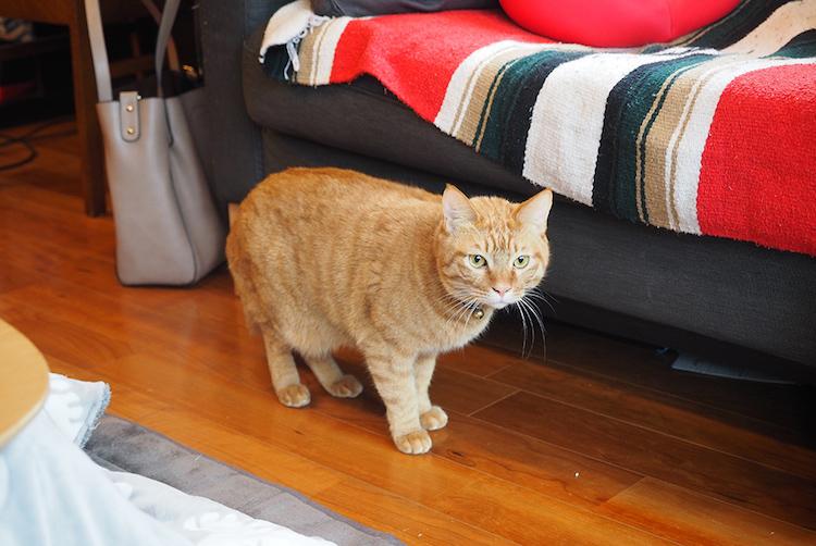 ワカコ・ラヒースト 猫