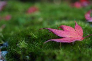 苔の里 叡智の杜