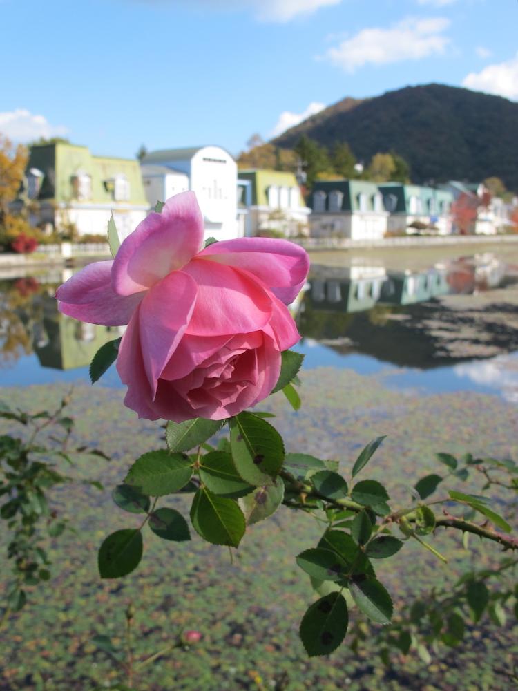 軽井沢レイクガーデン 秋のバラ