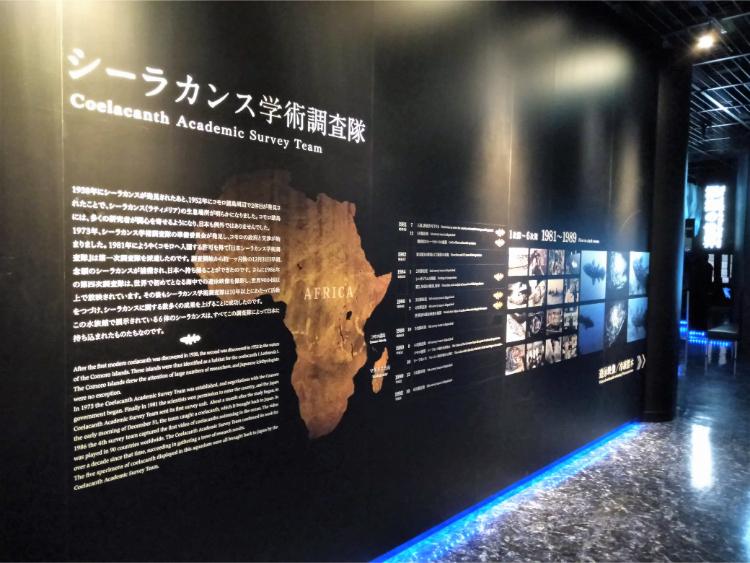 沼津港深海水族館シーラカンス・ミュージアムのシーラカンス説明