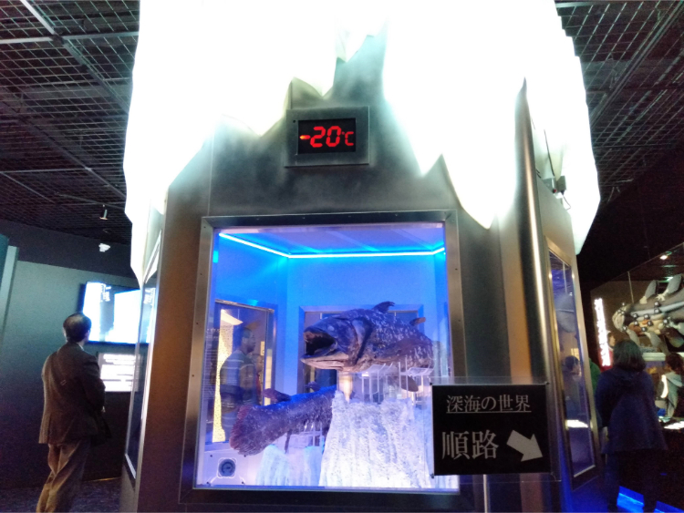 沼津港深海水族館シーラカンス・ミュージアムの冷凍展示室2