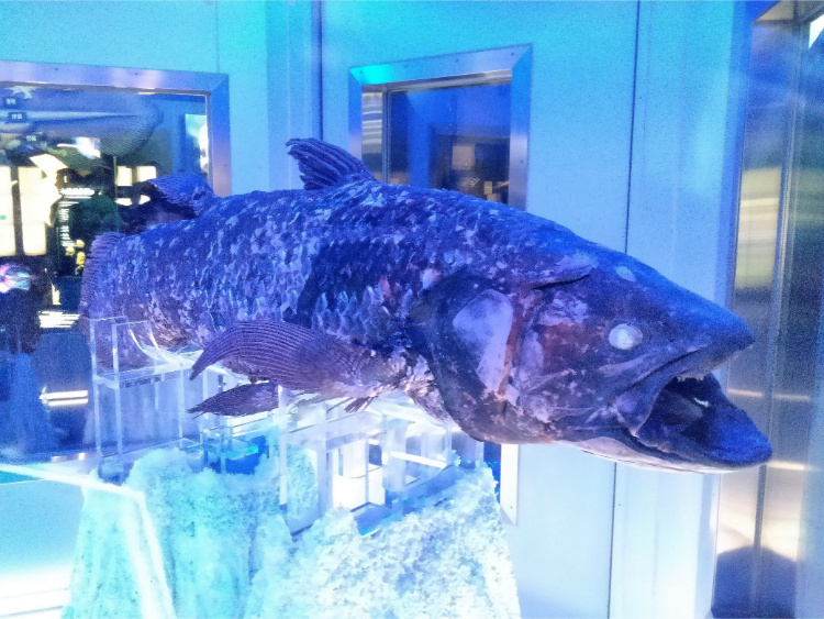 沼津港深海水族館シーラカンス・ミュージアムのシーラカンス冷凍個体