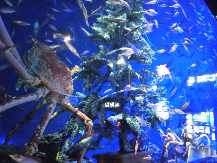 沼津港深海水族館シーラカンス・ミュージアムの深海生物