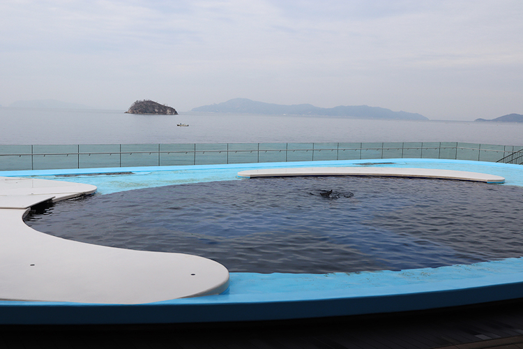 四国水族館 イルカプール